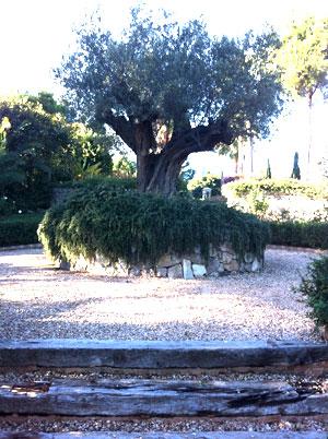 Gartendesign auf Mallorca